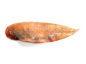 sole-fish